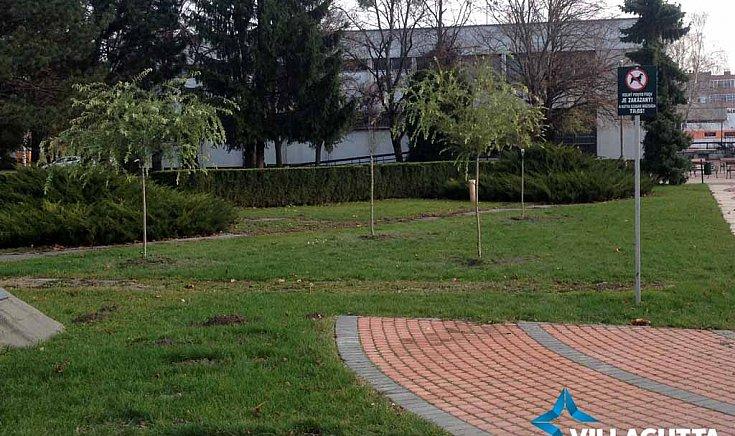 A fák új helye a város főterén.